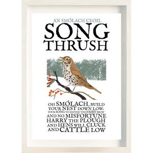 Birds of Ireland Song Thrush Frame