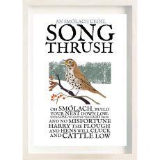 The Ireland Posters Store Birds of Ireland Song Thrush Frame