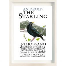 The Ireland Posters Store Birds of Ireland Starling Frame